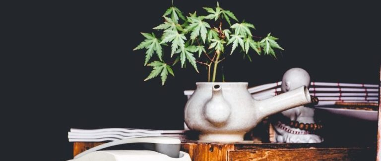 Cannabis plant blooming from a pot